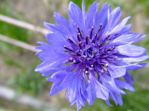 友の恋歌  矢ぐるまの花