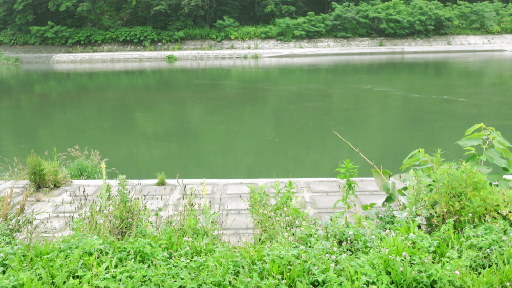 盃川の思い出