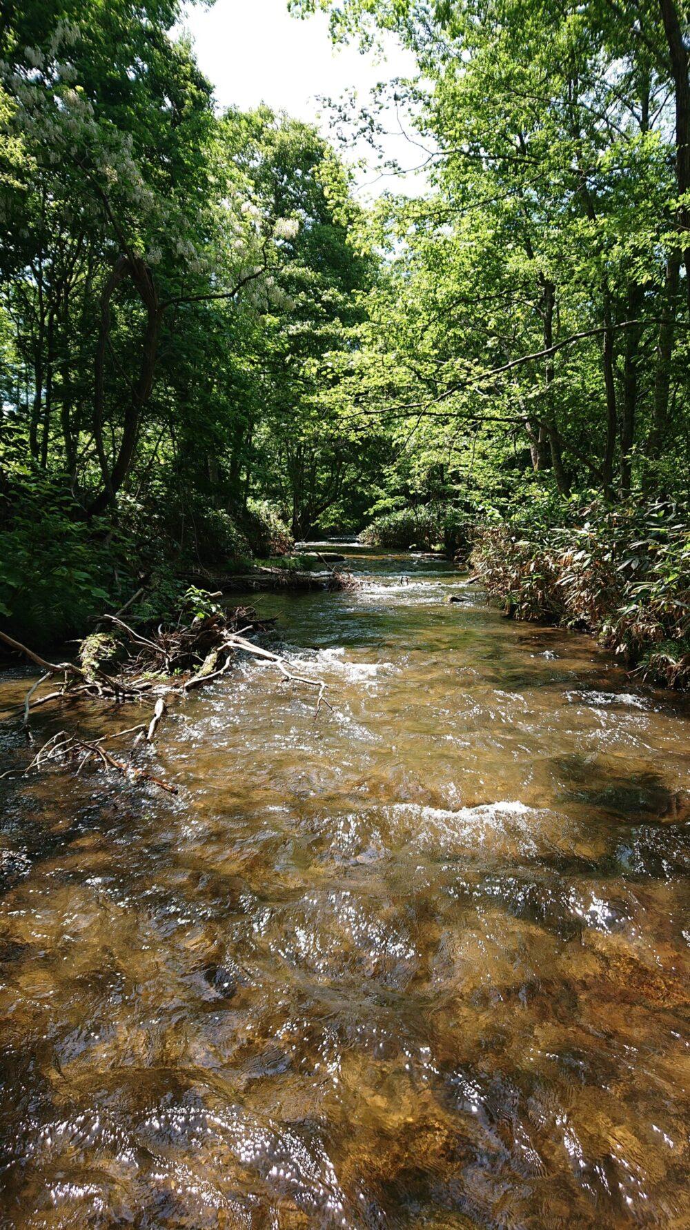 暑い日には渓流で過ごす。